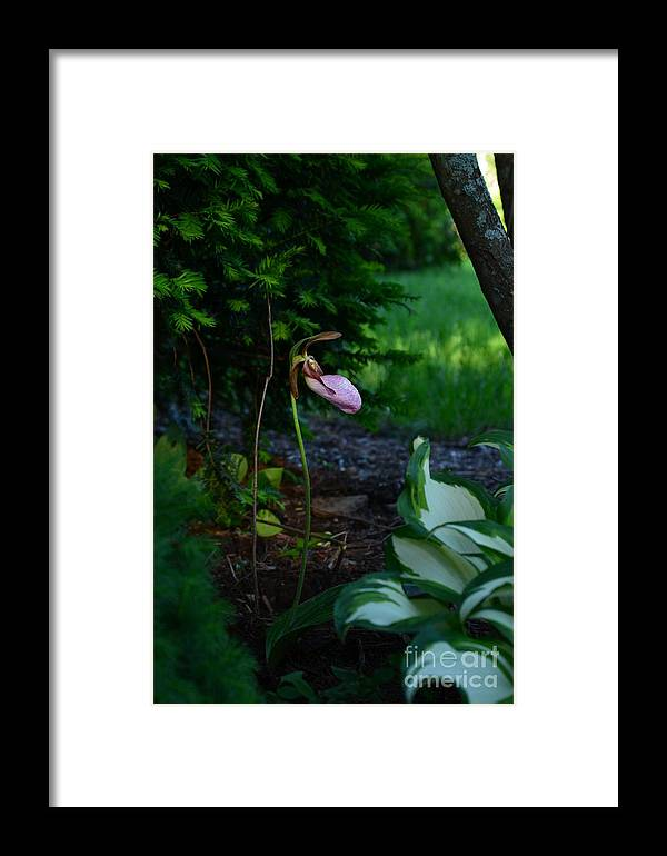 West Brookfield Gardens Ma Flowerscape Framed Print featuring the photograph The Elusive Lady Slipper Lll by Peter Toto