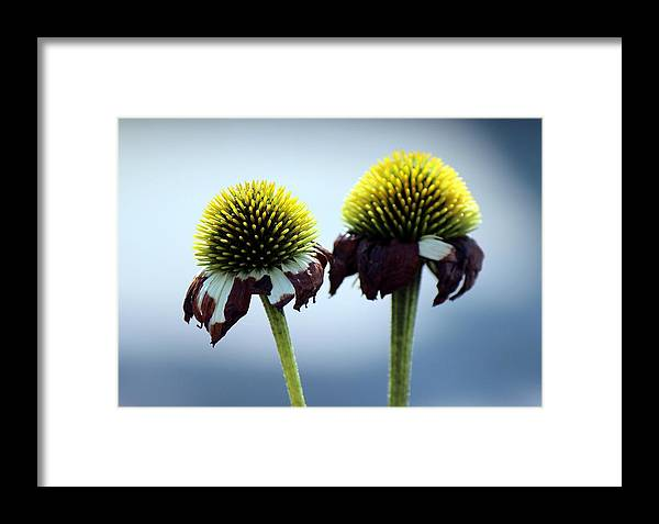 Flower Framed Print featuring the photograph The End by Peggy Burley