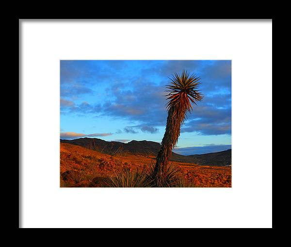 Dramatic Framed Print featuring the photograph The Endangered Wild West by James Welch