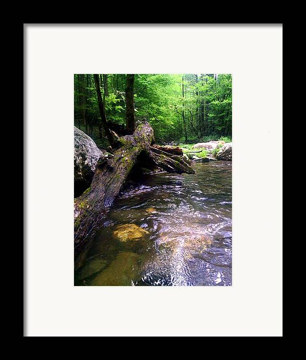 River Framed Print featuring the photograph The Fallen by Dwayne Gresham