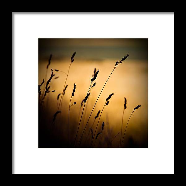 Filed At Sunset Framed Print featuring the photograph The Field by Dave Bowman