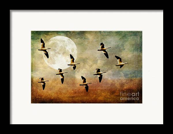 Geese Framed Print featuring the photograph The Flight Of The Snow Geese by Lois Bryan