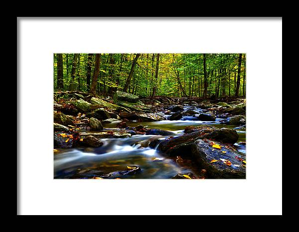 Forest Framed Print featuring the photograph The Forest by Mitch Cat