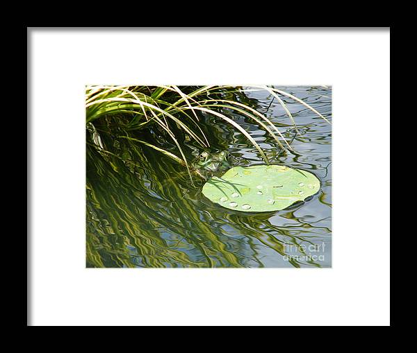 Frog Framed Print featuring the photograph The Frog Prince by Cheryl Hardt Art