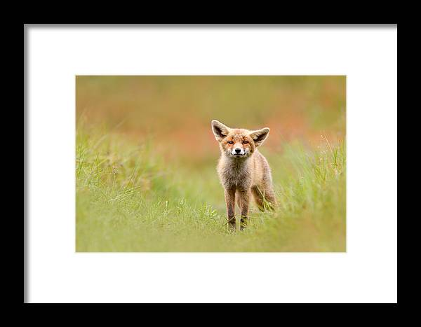 Camouflage Framed Print featuring the photograph The Funny Fox Kit by Roeselien Raimond