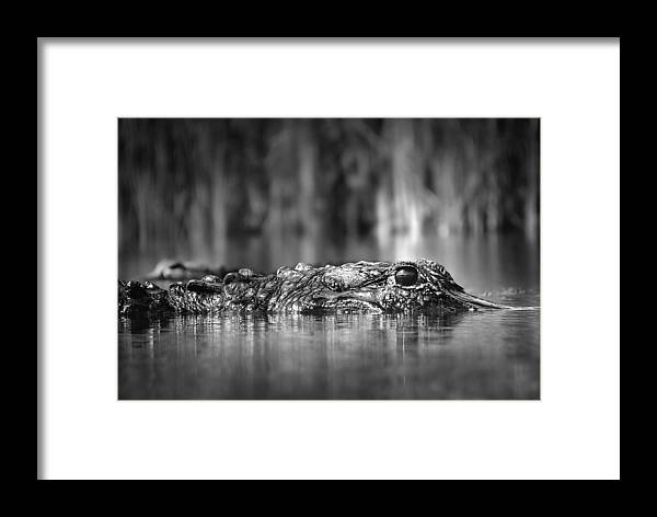 Alligator Framed Print featuring the photograph The Gator by Mark Andrew Thomas