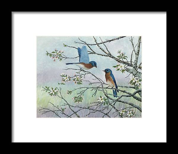 Bluebirds; Trees; Wildlife Framed Print featuring the painting The Gift by Ben Kiger