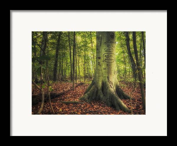 Tree Framed Print featuring the photograph The Giving Tree by Scott Norris