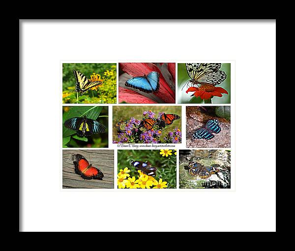 Diane Berry Framed Print featuring the photograph The Glory Of Butterflies 3 by Diane E Berry