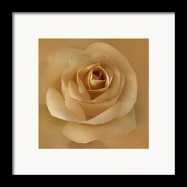 Rose Framed Print featuring the photograph The Golden Rose Flower by Jennie Marie Schell