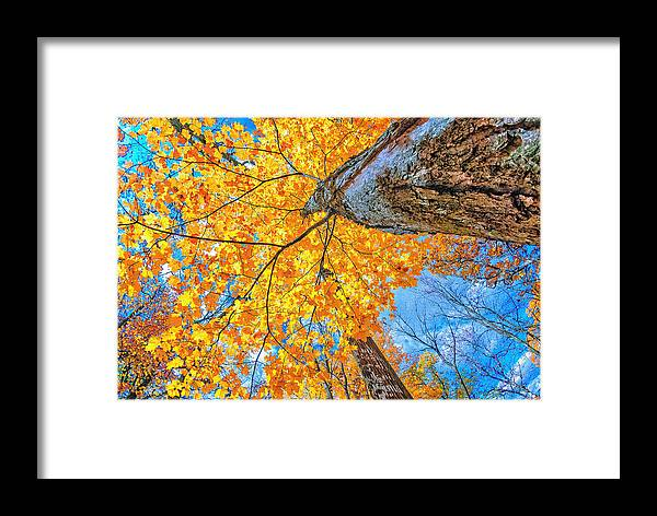 Tree Framed Print featuring the photograph The Gorgeous Fall by Kimberleigh Ladd
