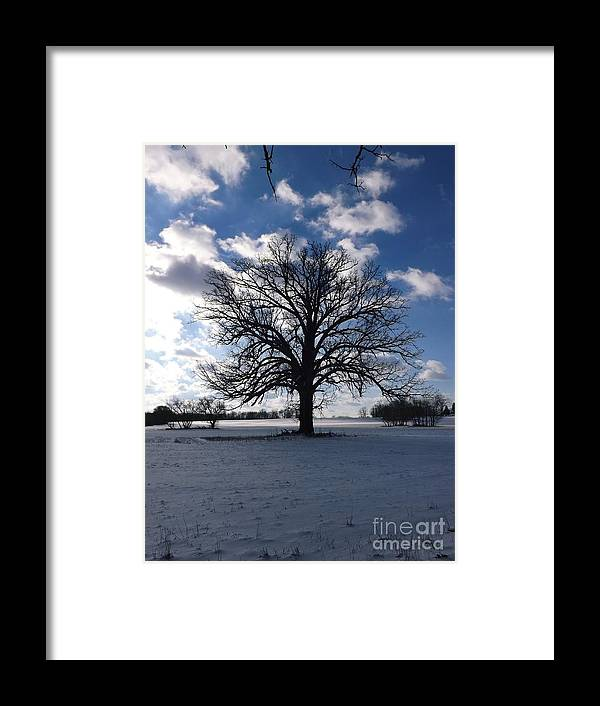 Oak Tree Framed Print featuring the photograph The Grand Tree Season Winter by Gerald Strine