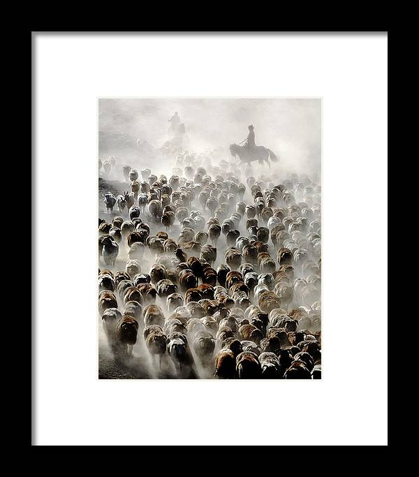 Sheep Framed Print featuring the photograph The Great Migration Of China by Adam Wong