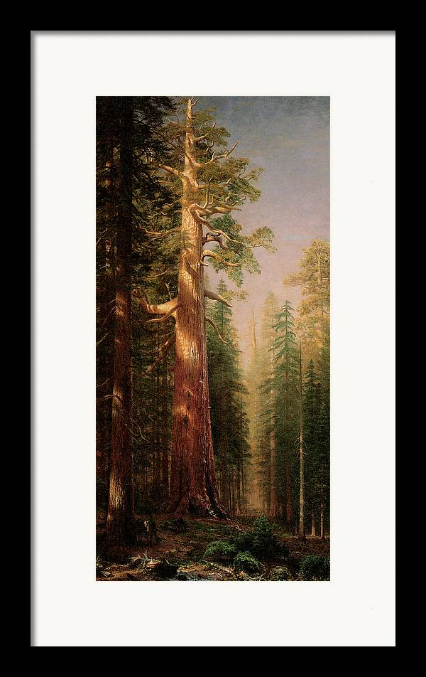 Albert Bierstadt Framed Print featuring the painting The Great Trees Mariposa Grove California by Albert Bierstadt