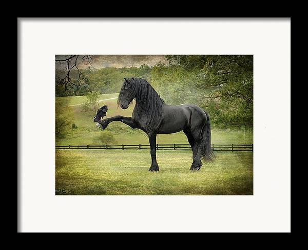 Friesian Horses Framed Print featuring the photograph The Harbinger by Fran J Scott