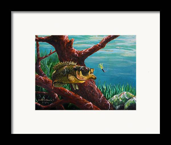 Fish Framed Print featuring the painting The Hit   Warmouth by Scott Alcorn