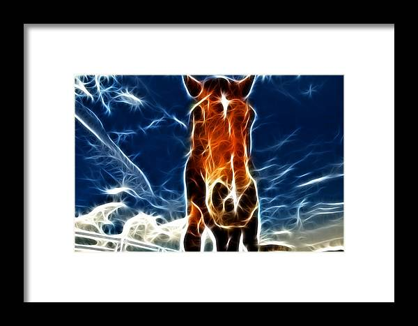 Horse Framed Print featuring the photograph The Horse by Paul Ward