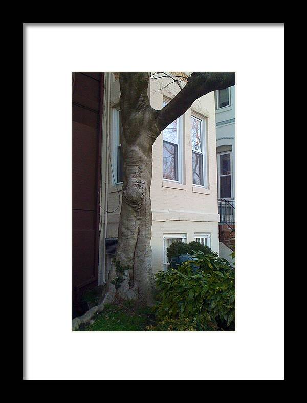 Tree Framed Print featuring the photograph The Human Tree by Lois Ivancin Tavaf