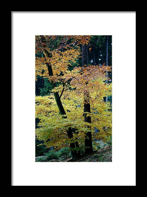 Autumn Framed Print featuring the photograph The Joy Of Being In Autumn by Mah FineArt