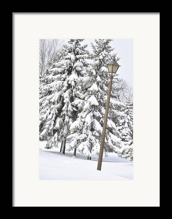 Snow Framed Print featuring the photograph The Lamp And The Tree by Frederico Borges
