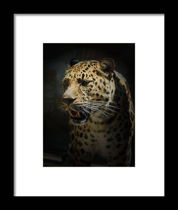 Animals Framed Print featuring the photograph The Leopard by Ernie Echols
