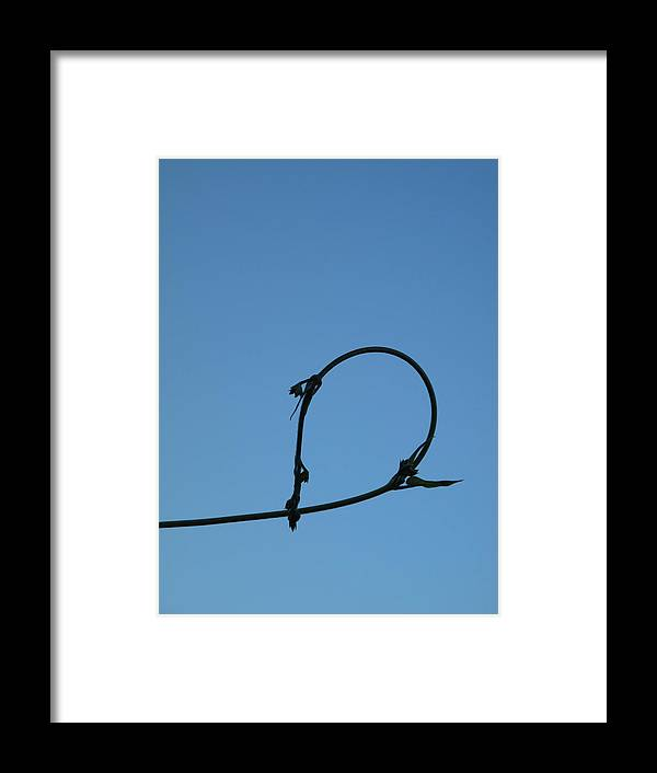 Small Plant Framed Print featuring the photograph The Little Blue Boy by Frank Chipasula