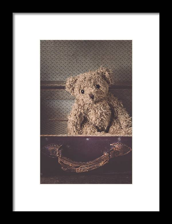 Bear Framed Print featuring the photograph The Little Vagabond by Amy Weiss