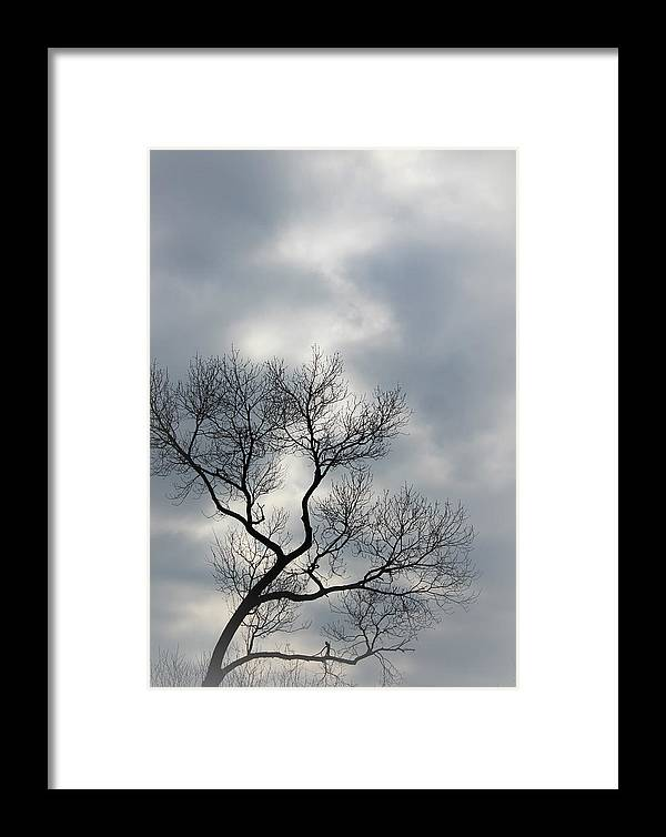 Trees Framed Print featuring the photograph The Lonely Tree by The Art Of Marilyn Ridoutt-Greene