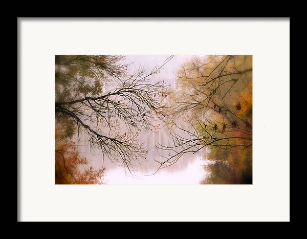 Tree Framed Print featuring the photograph The Meeting by Michelle Ayn Potter