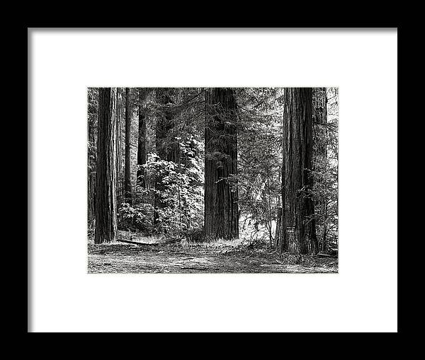 West Framed Print featuring the photograph The Mighty Redwood by Hal Norman K