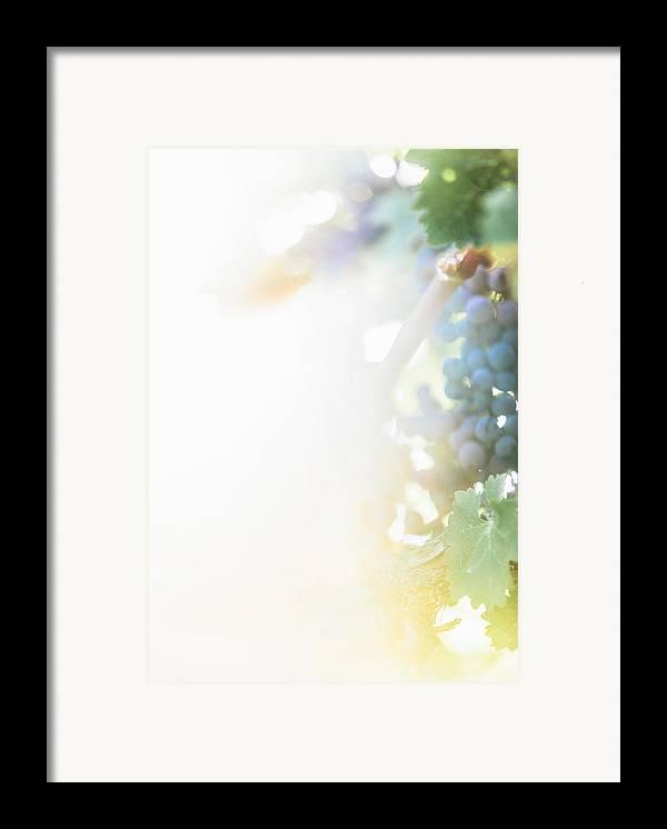 Fine Art Framed Print featuring the photograph The Modern Grape 3 by Clint Brewer