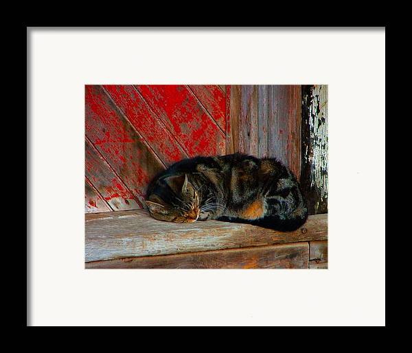 Cats Framed Print featuring the photograph The Old Mill Cat by Julie Dant