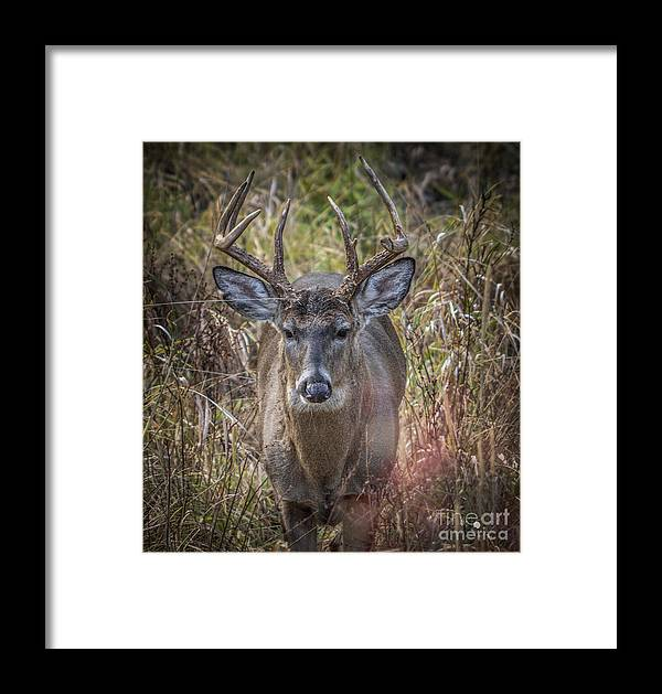 Deer Framed Print featuring the photograph The One You Look For by Ronald Grogan