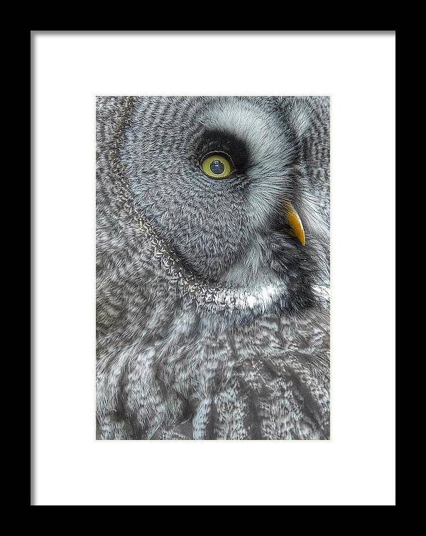 Owl Framed Print featuring the photograph The Owl by Guido Schaefer