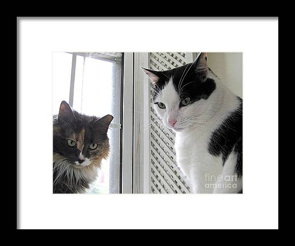Stray Cat Couple Framed Print featuring the photograph The Parents by Byron Varvarigos