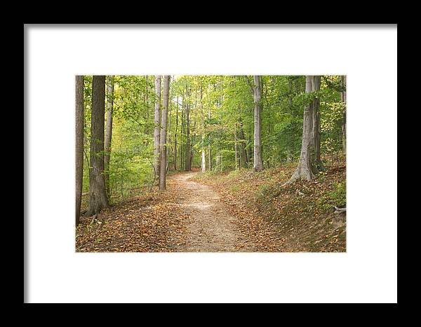 Park Framed Print featuring the photograph The Path Less Traveled by Rosemary Armel