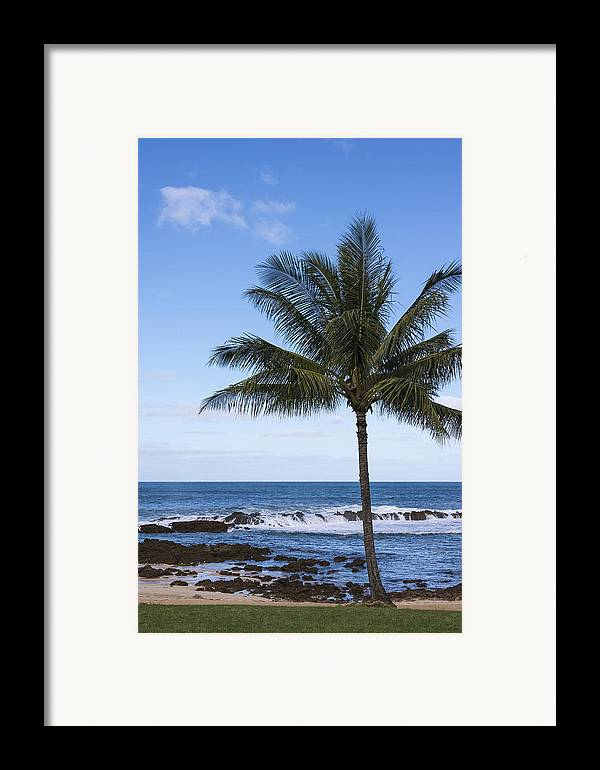 Perfect Palm Tree Sharks Cove At Sunset Beach Oahu Hawaii Hi Seascape Framed Print featuring the photograph The Perfect Palm Tree - Sunset Beach Oahu Hawaii by Brian Harig