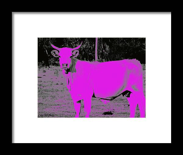 Pink Framed Print featuring the photograph the Pink Cow by George Pedro
