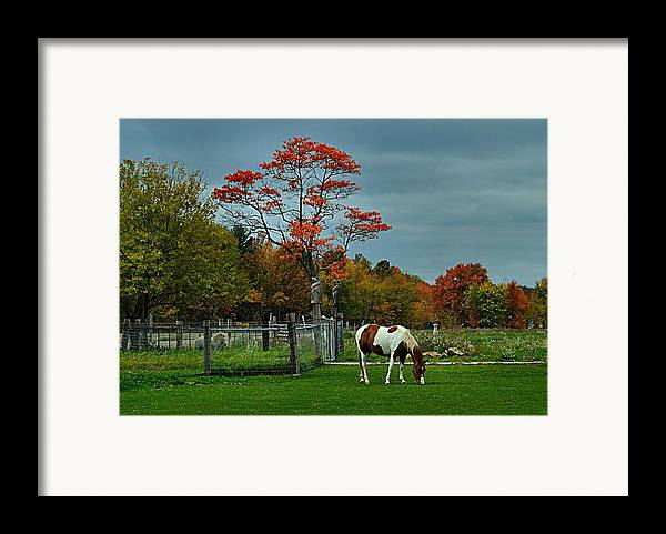 Fall Scenes Framed Print featuring the photograph The Pinto by Julie Dant