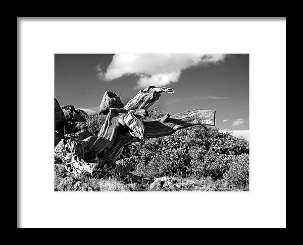 Bristlecone Pine Photograph Framed Print featuring the photograph The Prophet by Jim Garrison