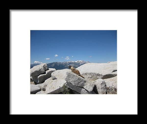 Half Dome Framed Print featuring the photograph The Resident of Half Dome by AC Hamilton