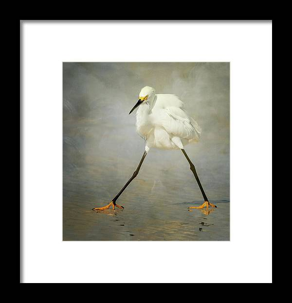 Bird Framed Print featuring the photograph The Rock Star by Alfred Forns