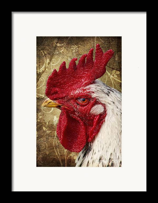 Rooster Framed Print featuring the photograph The Rooster by Angela Doelling AD DESIGN Photo and PhotoArt