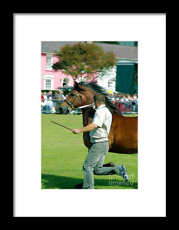 Aberaeron Framed Print featuring the photograph The Running Of The Stallions by Tess Baxter