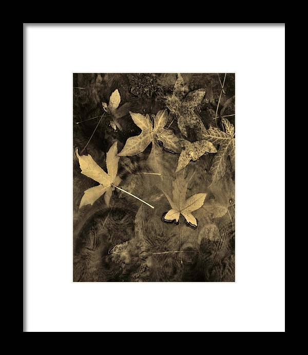 Nature Framed Print featuring the photograph The Silent Percussion Sepia Tone by Charles Lucas