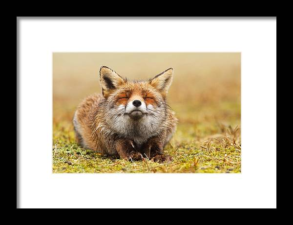 Fox Framed Print featuring the photograph The Smiling Fox by Roeselien Raimond