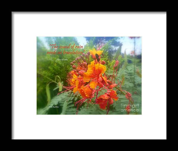 Rain Framed Print featuring the photograph The Sound Of Rain by Charmiene Maxwell-Batten