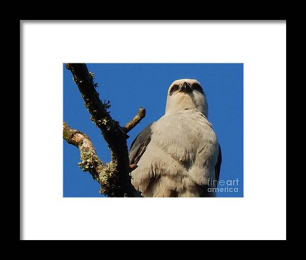 Nola Framed Print featuring the photograph New Orleans Southern Osprey by Michael Hoard