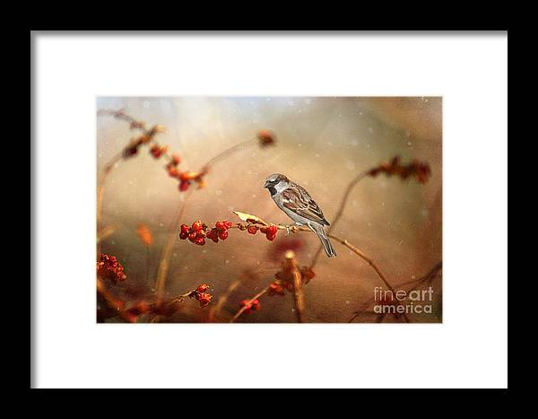 Texture Framed Print featuring the photograph The Sparrow by Darren Fisher