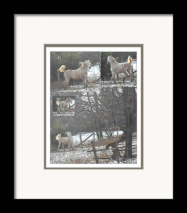 Horse Photography Framed Print featuring the photograph The Stallion Lives In The Country by Patricia Keller